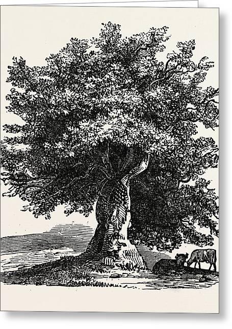 The Renewed Tree Greeting Card by English School