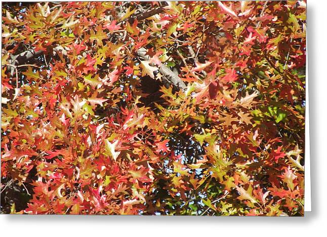 The Rich Reds And Yellows Of Fall Greeting Card