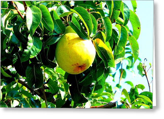 The Ripe Pear Greeting Card by Kay Gilley