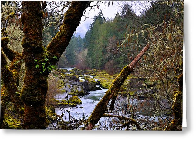 The River Through The Trees Greeting Card