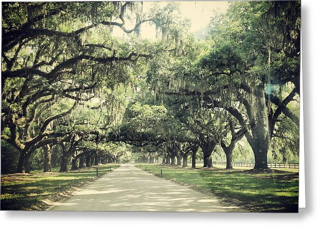 The Road From Boone Hall Greeting Card
