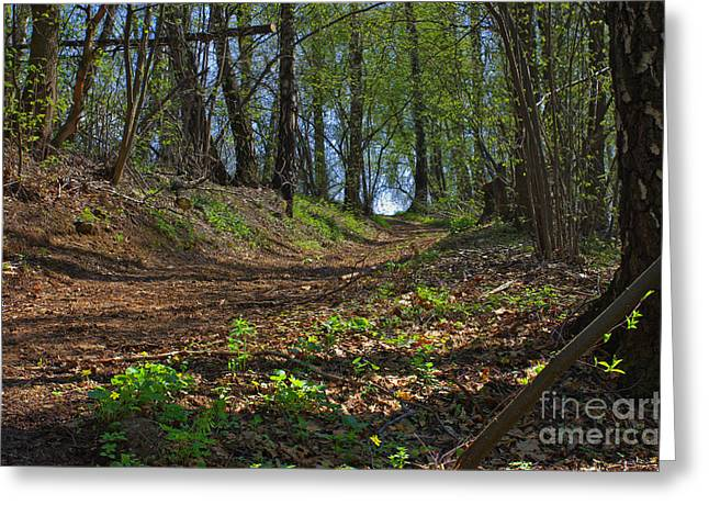 The Road In Spring Forest Greeting Card by