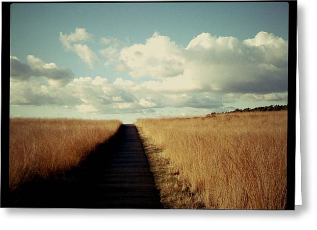 The Road Rarely Taken Greeting Card by Beril Sirmacek