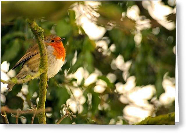 The Robin Greeting Card by Dave Woodbridge