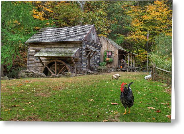 The Rooster Rules Greeting Card by William Jobes