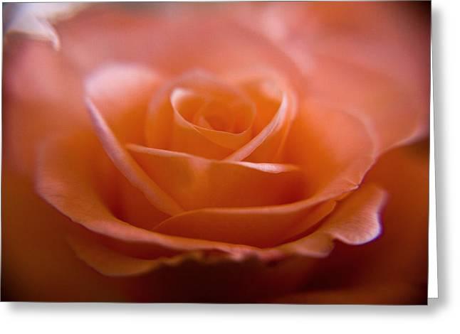 The Rose Greeting Card by Kim Lagerhem