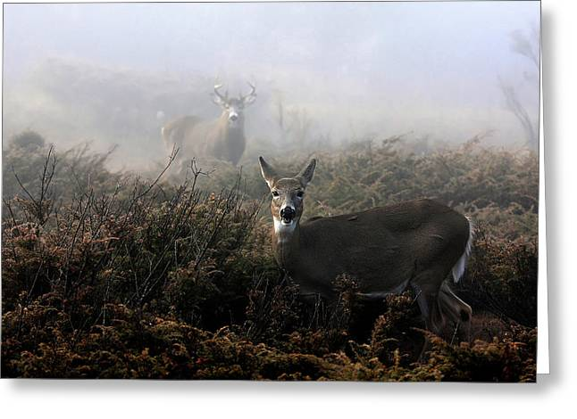 The Rut In On - White-tailed Deer Greeting Card