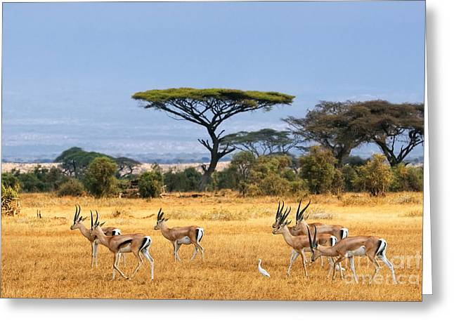 The Safari And Animals Greeting Card by Boon Mee