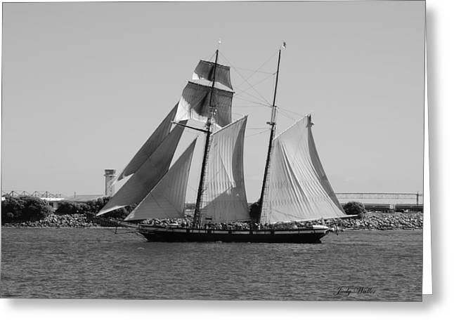 The Sails Greeting Card by Judy  Waller