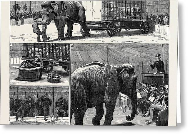 The Sale By Auction Of Myers Great American Circus Greeting Card by English School