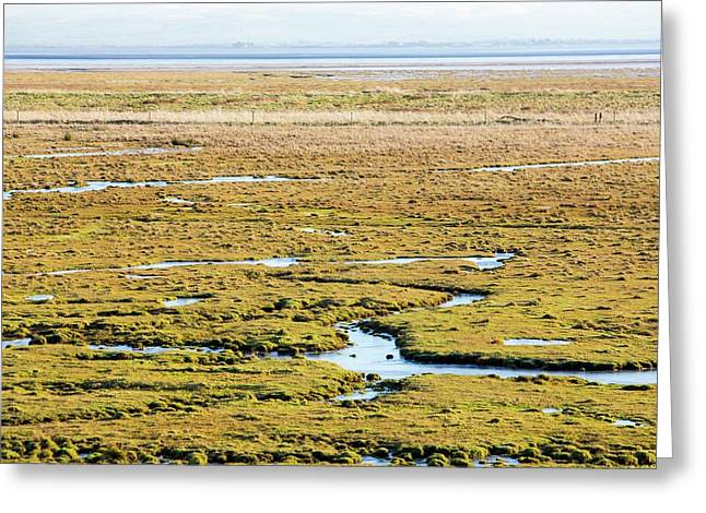 The Salt Marsh Or Merse At Caelaverock Greeting Card