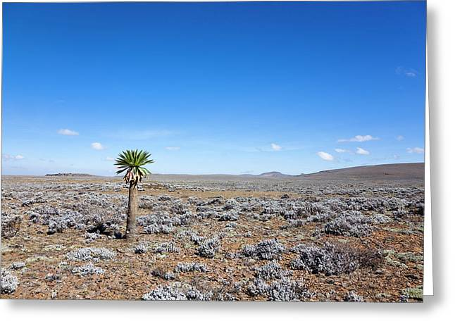 The Sanetti Plateau, Bale Mountains Greeting Card by Martin Zwick