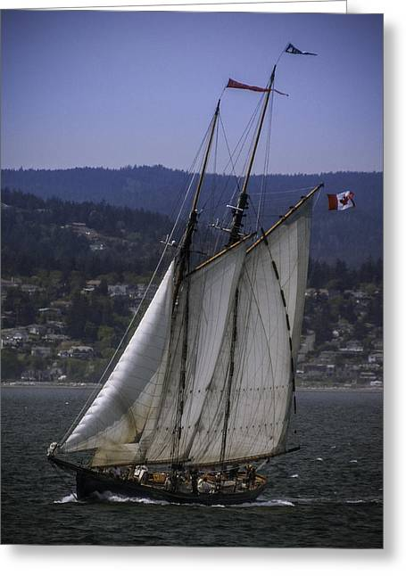 The Schooner Pacific Grace Greeting Card