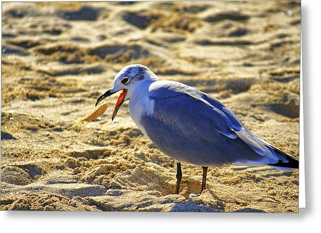 The Seagull And His Sand-crusted Fish 1 Of 3 Greeting Card by Jason Politte