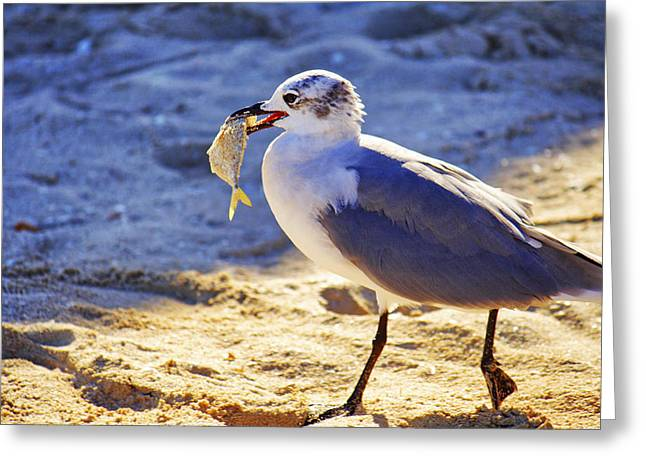 The Seagull And His Sand-crusted Fish 2 Of 3 Greeting Card by Jason Politte