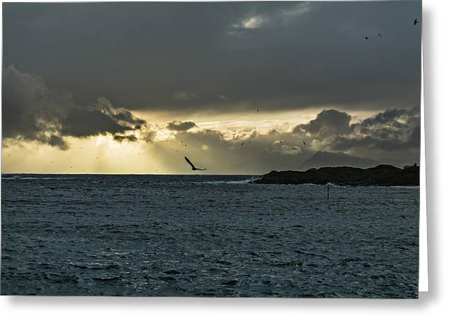 The Seagull Greeting Card