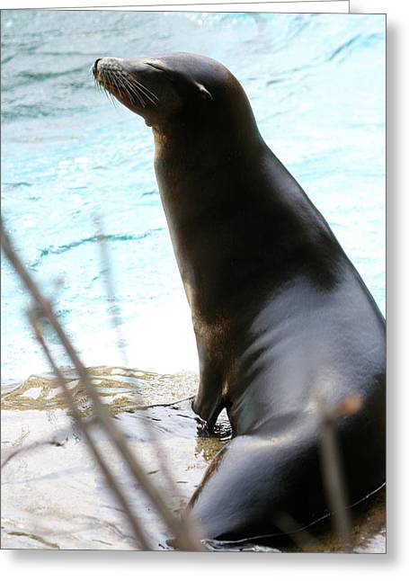 The Sea Lion Life Greeting Card by Angela Rath