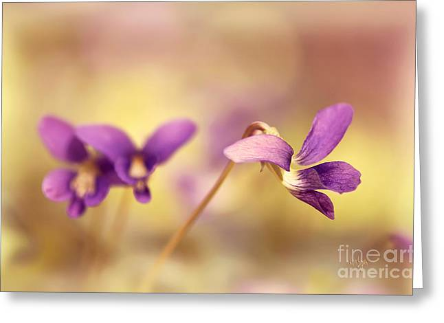 The Secret World Of Wild Violets Greeting Card by Lois Bryan