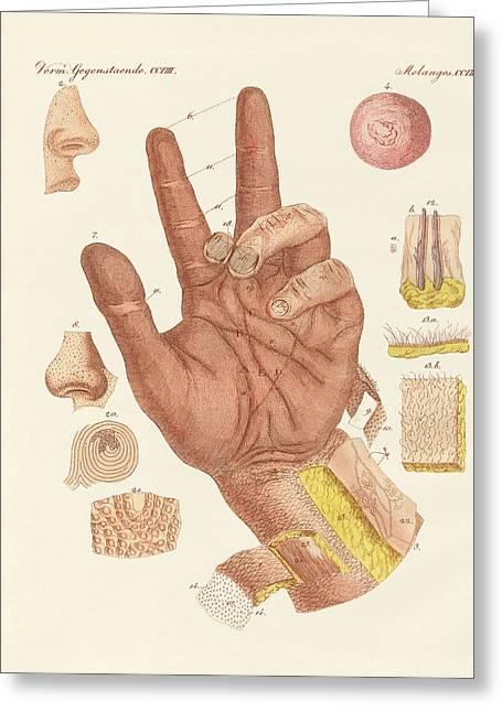 The Sense Or View Of The Human Skin Greeting Card by Splendid Art Prints