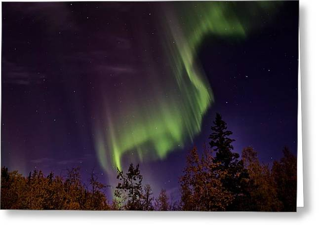 Greeting Card featuring the photograph The September Aurora Fairbanks Alaska by Michael Rogers