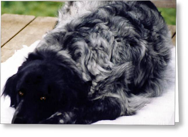 The Shaggy Dog Named Shaddy Greeting Card by Marian Cates