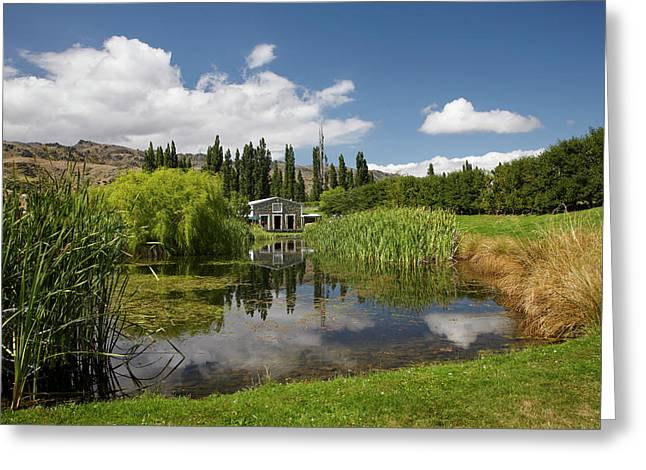 The Shed And Pond, Northburn Vineyard Greeting Card by David Wall