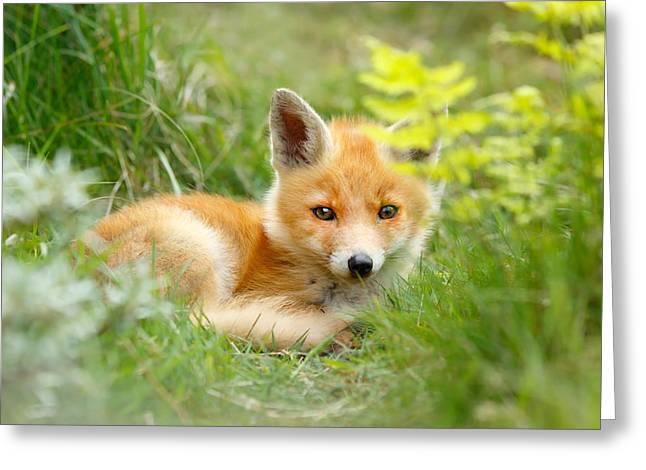 The Shy Kit Fox Cub Hiding Behind Some Ferns Greeting Card