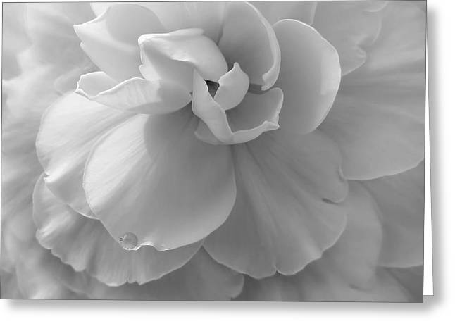 The Silver Lady Begonia Flower Greeting Card by Jennie Marie Schell