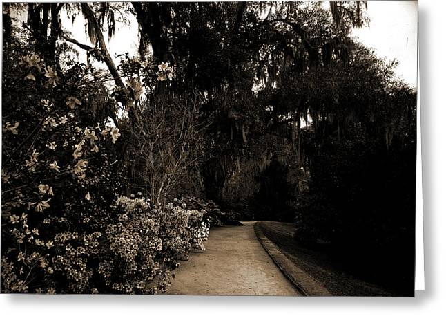 The Slope Walk, Magnolia-on-the-ashley, Magnolia Gardens Greeting Card by Litz Collection