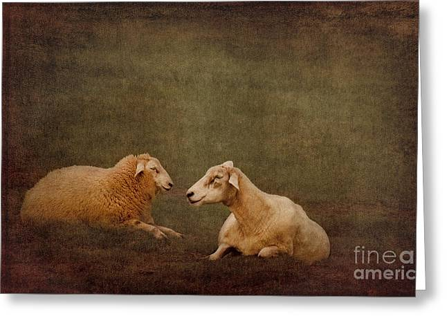 The Smiling Sheeps Greeting Card by Angela Doelling AD DESIGN Photo and PhotoArt