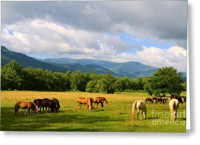 The Smokies Greeting Card by Jay Nodianos