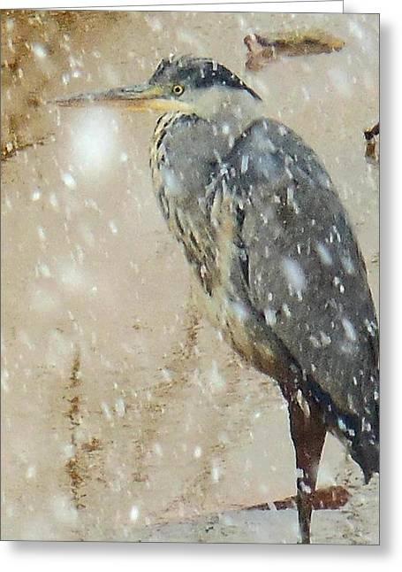 The Snow Bird Greeting Card
