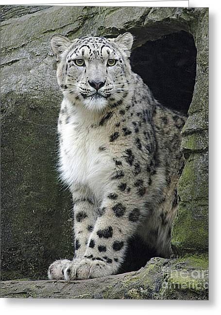 The Snow Leopard Greeting Card