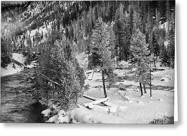 The Snow Tree's Greeting Card