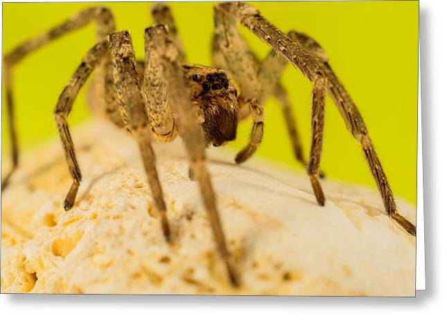 The Spider Series Iv Greeting Card by Marco Oliveira