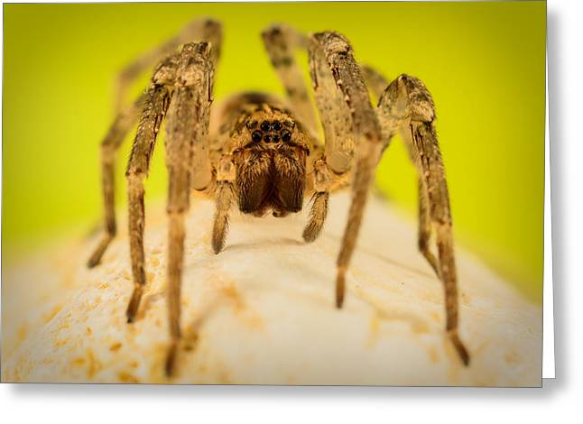 The Spider Series V Greeting Card