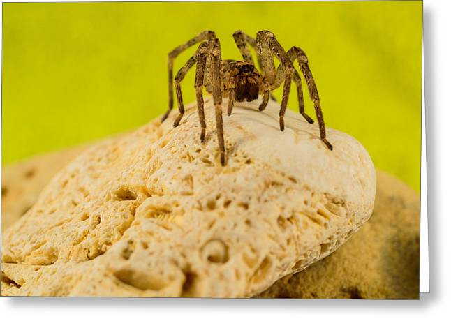 The Spider Series Vi Greeting Card by Marco Oliveira
