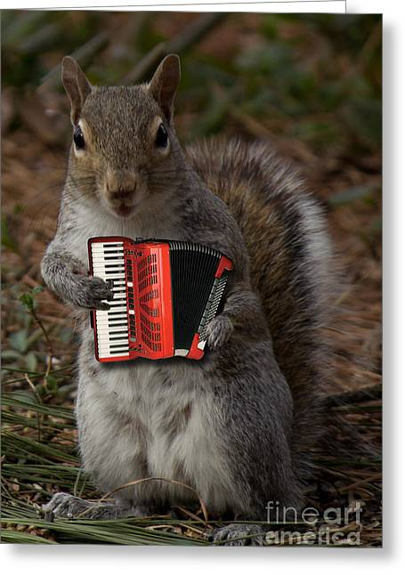 The Squirrel And His Accordion Greeting Card