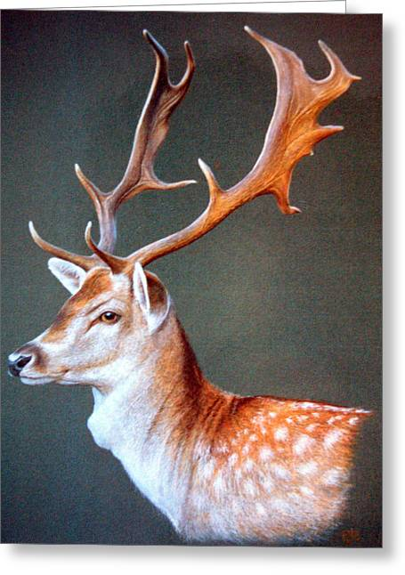 The Stag Greeting Card