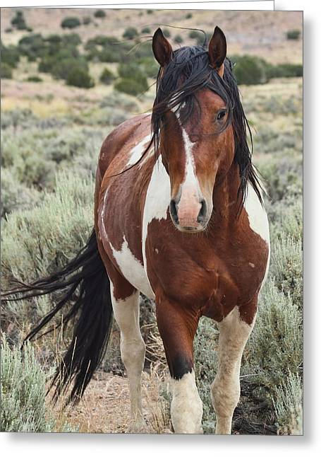 The Stallion Greeting Card by Gene Praag