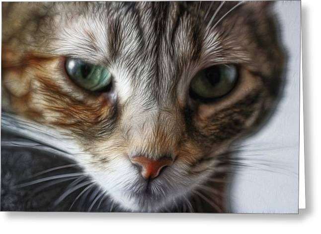 00002 The Stare Greeting Card by Photographic Art by Russel Ray Photos