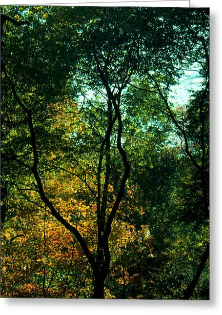 Greeting Card featuring the photograph The Start Of Fall by Ben Kotyuk