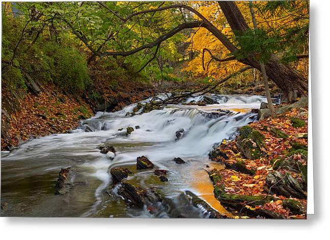 The Still River Greeting Card by Bill Wakeley