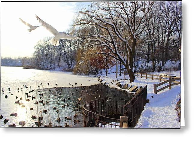 The End Of The Storm Greeting Card by Dora Sofia Caputo Photographic Art and Design