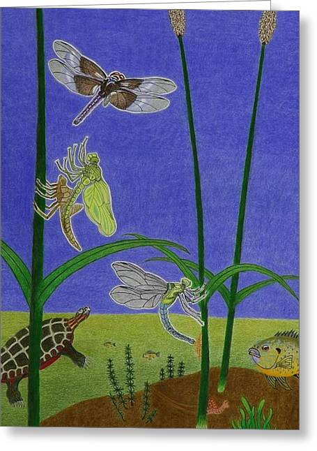 The Story Of The Dragonfly With Description Greeting Card