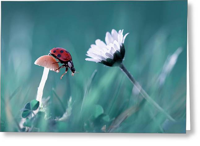 The Story Of The Lady Bug That Tries To Convice The Mushroom To Have A Date With The Beautiful Daisy Greeting Card
