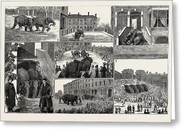 The Strange Adventures Of Two Runaway Elephants In Kentish Greeting Card by English School