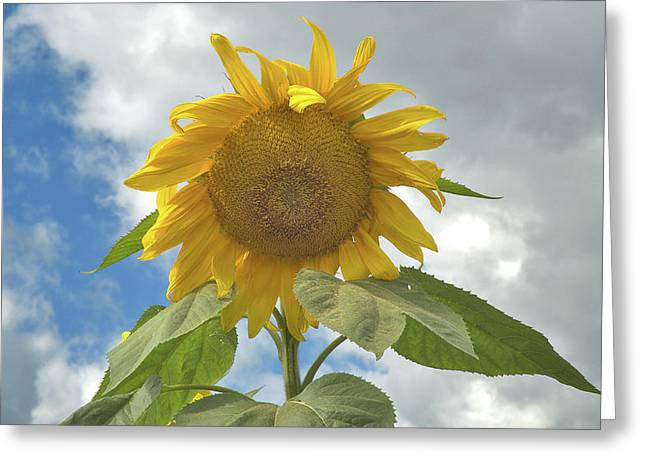 The Sun Is Out Greeting Card