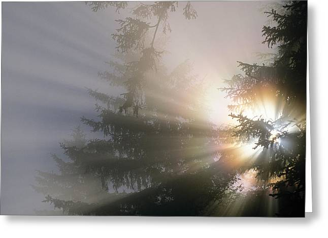 The Sun Shines Through Fog And Forest Greeting Card by Robert L. Potts