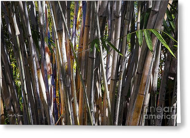 The Sun Through Bamboo Greeting Card